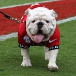 Uga the Georgia Bulldog